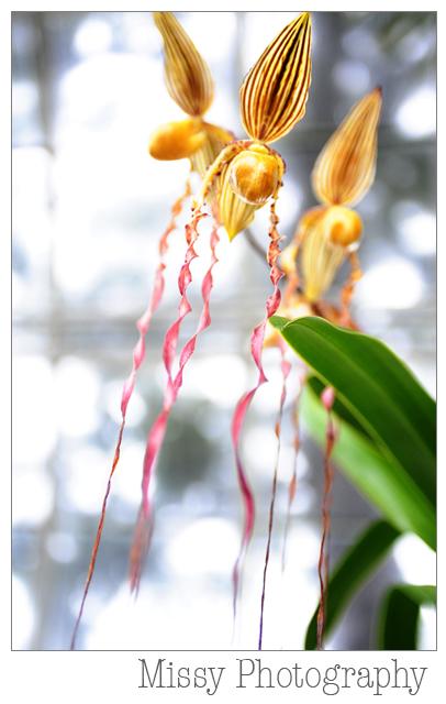 orchids-132