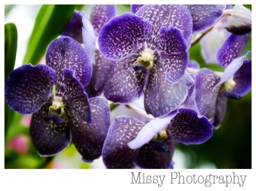 orchids-51